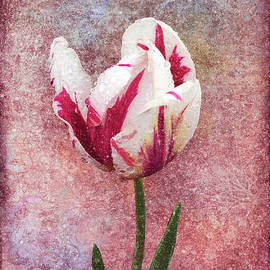 Tulip and Texture by Grace Iradian