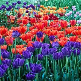 Tulip Bliss by Lynn Bauer