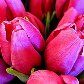 Bonita Brandt - Tulip Bouquet