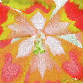 Tulip Centricity Love Abstract by Claudia O'Brien