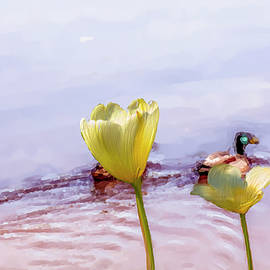 Leif Sohlman - Tulip Duck #g1