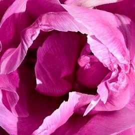 Jon Delorme - Tulip   No More No Less