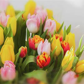 Svetlana Iso - Tulip season
