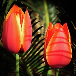Karen Wiles - Tulip Shadows