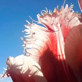 Honey Behrens - Tulip Temptress