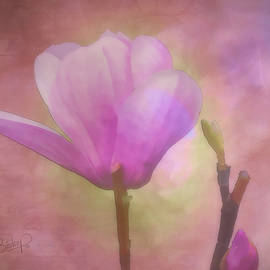 Larry Bishop - Tulip Tree Bloom and Bud