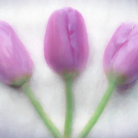 Hal Halli - Tulip Triad