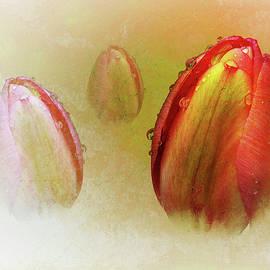 Richard Sayer - Tulip Trilogy