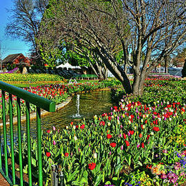 Tulips in the Park by Kaye Menner