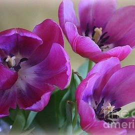 Tulips Lovely in Magenta by Dora Sofia Caputo Photographic Design and Fine Art