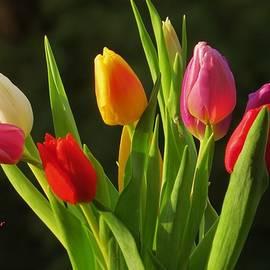 B Vesseur - Tulips To Spring