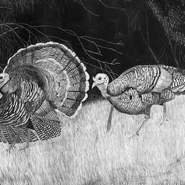 Turkey Strut by James Schultz