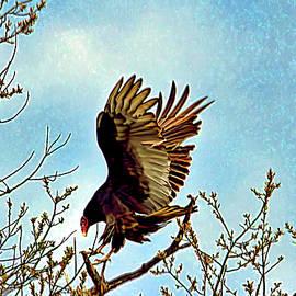 Geraldine Scull - Turkey vulture in tree