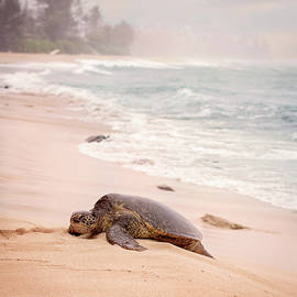 Turtle Beach by Heather Applegate
