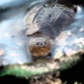 Turtle Omen by Yuri Lev