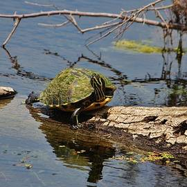 Cynthia Guinn - Turtle Stretch
