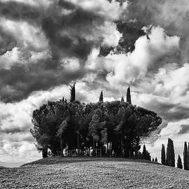 Ryan W Curley - Dramatic Tuscan Cypresses