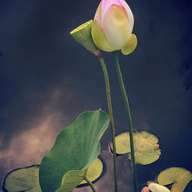 Jessica Jenney - Twilight Lotus Pond