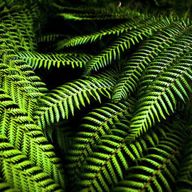 Twilight Rainforest Fern  by Jorgo Photography - Wall Art Gallery