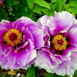 Ed Weidman - Twin Beauties