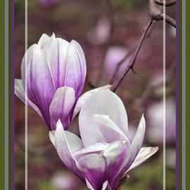 Sandra Huston - Twin Magnolia Blossoms, Framed
