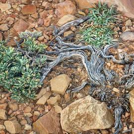 Nikolyn McDonald - Twisted Tree - Abstract