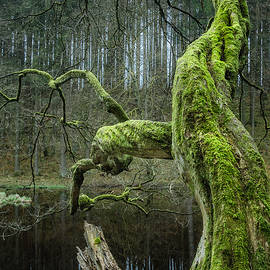 Alexander Kunz - Twisted Tree