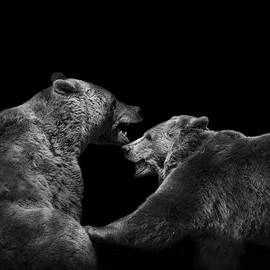 Lukas Holas - Two Bears in black and white