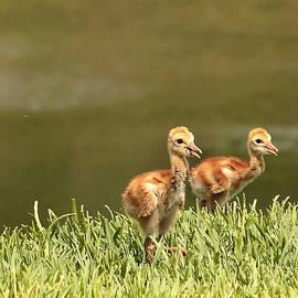 Carol Groenen - Two Chicks