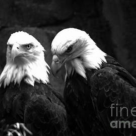 Two Eagles Black And White by Adam Jewell