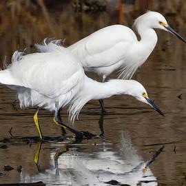 Bruce Frye - Two Egrets Fishing