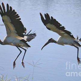 Carol Groenen - Two Flying Wood Storks
