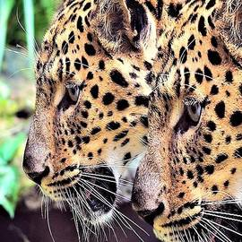 Mike Henniger Marilyn Alexander - Two Leopards