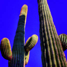 Two Saguaros Against Blue Sky by Roger Passman