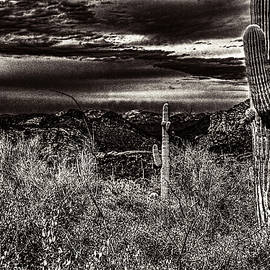 Roger Passman - Two Saguaros and a Winter Storm Brewing