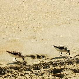 Kathy Barney - Two Sandpipers at OBX