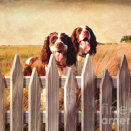 L Wright - Two Spaniels Exploring