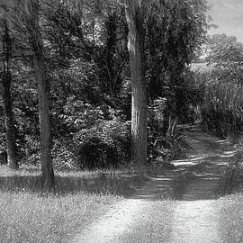 William Sturgell - Two Track Leading to the Fields in Black and White