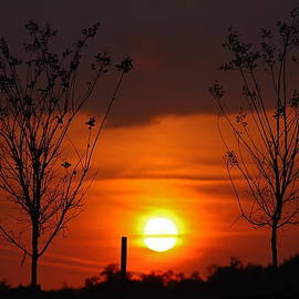 Two Trees And The Sun by Denise Mazzocco