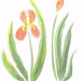 Two Iris II watercolor by Delynn Addams