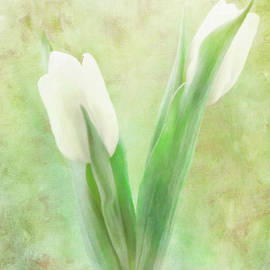 Two White Tulips by Hal Halli
