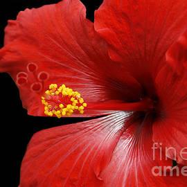 Sharon Mau - Ula Aloalo Hanohano for a Tropical State of Mind Red Hibiscus Maui Hawaii