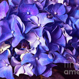 Ultra Violet Dance by Silva Wischeropp