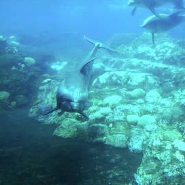 Under SeaWorld by Douglas Martin