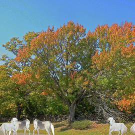 Patricia Keller - Under The Autumn Maple Tree