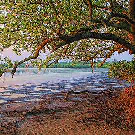 HH Photography of Florida - Under The Mangroves