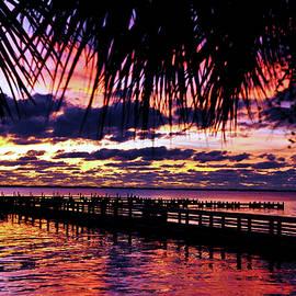 Davids Digits - Under the palms Sunrise