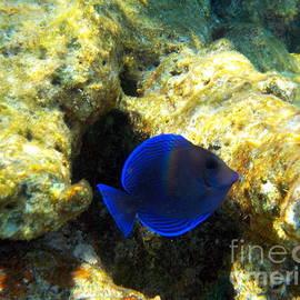 Under the Sea Key Largo by Charlene Cox