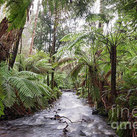 Under the Tree Ferns by Linda Lees