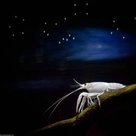LeeAnn McLaneGoetz McLaneGoetzStudioLLCcom - Underwater Starry Night